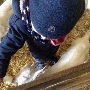geitenboerderij, 't geertje, zoeterwoude, review, gezin, budget uitje, mamablogger, Marisca, kenter