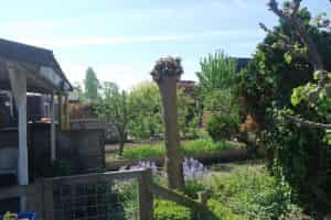 tuinverbouwing_onze tuin_mamablogger_persoonlijk_zomer_tuin_opknappen_familyblogger_