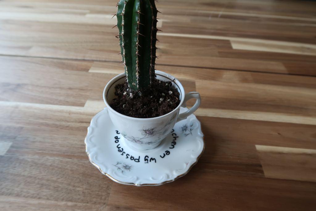 DIY_budget_schoteltjes_cadeaubon_vintage_cactus_beleving_belevenis_Mamablogger_Marisca_