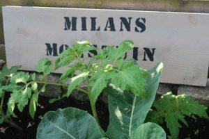 Milans Moestuin_Mamablogger_Marisca_update_Albert Heijn_Intratuin_tuin_kinder moestuin_