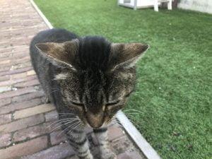 huisdieren_katten_mamablogger_gezin_kat_