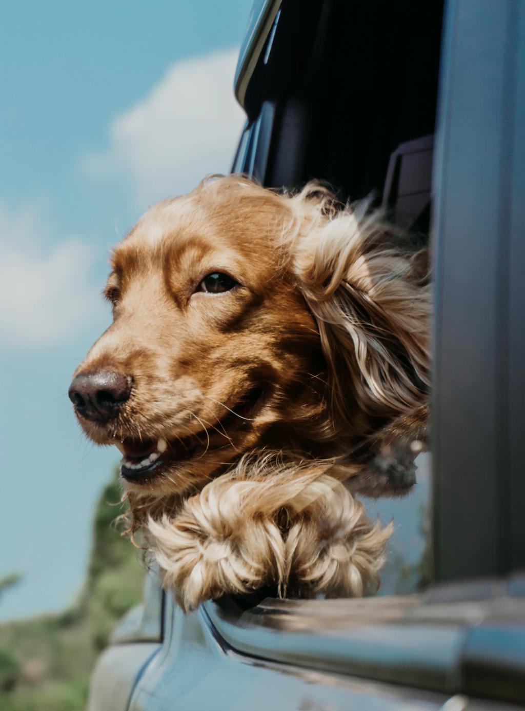 hond_meenemen_vakantie_huisdier_weekend weg_mamablogger_Van der Valk_