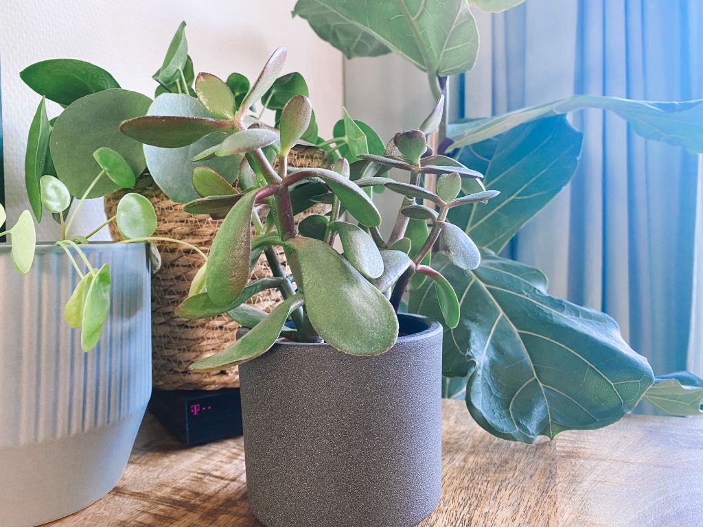 plantenmoeder_planten_kamerplanten_mamablogger_